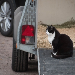 "20180629 Cat in a horsetrailer • <a style=""font-size:0.8em;"" href=""http://www.flickr.com/photos/41073551@N05/40582097503/"" target=""_blank"">View on Flickr</a>"