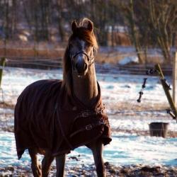"""vinter piggt föl • <a style=""""font-size:0.8em;"""" href=""""http://www.flickr.com/photos/41073551@N05/8398971886/"""" target=""""_blank"""">View on Flickr</a>"""