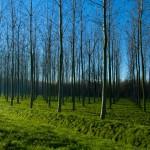Italian woods